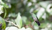 Costa Rica I Kolibri