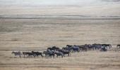 Mongolei I Modern Nomads