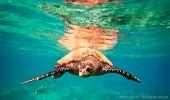 Madagaskar I Meeresschildkröte
