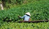 Vietnam I Wassergärtner